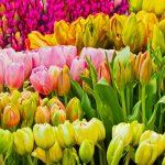 Conoce las flores para cada signo del zodíaco